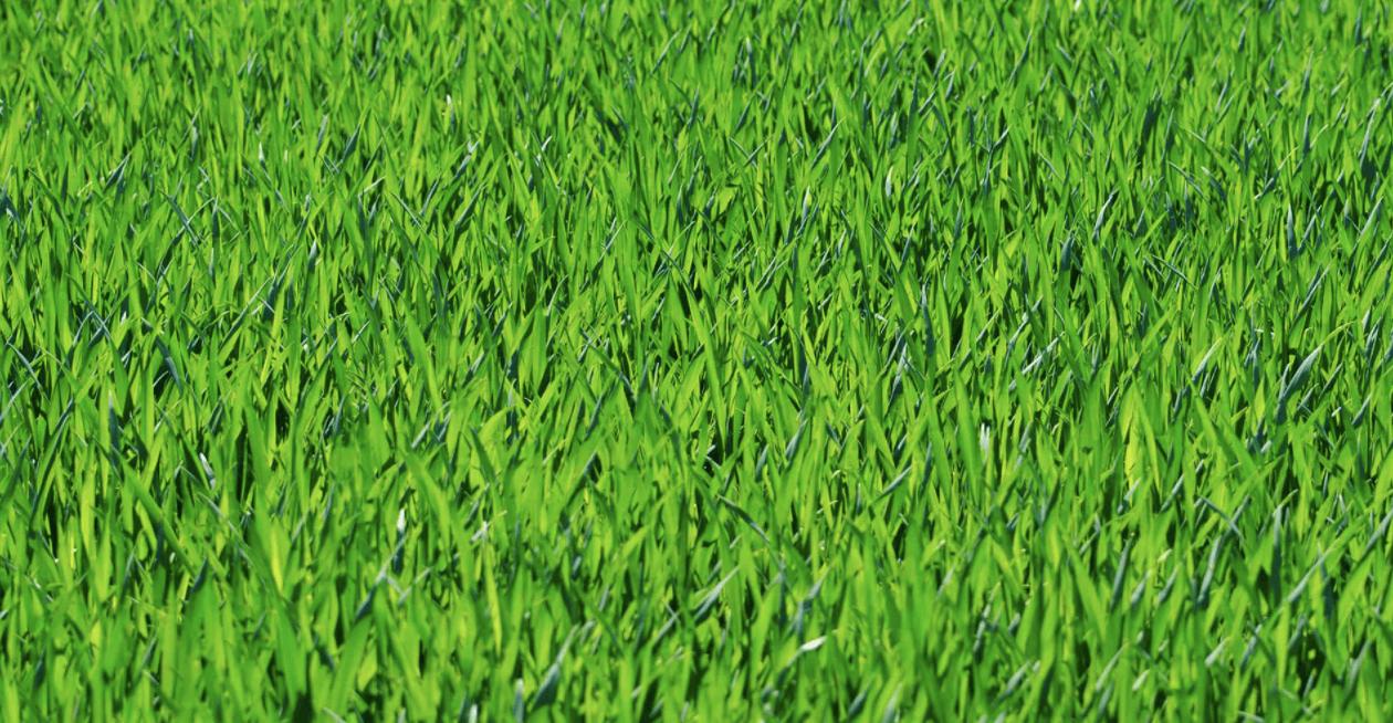Wonder Grasses